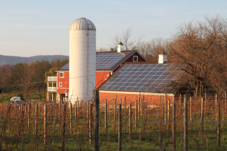 A solar-powered vineyard designed and delivered for one of our commercial clients